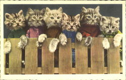 Kittens on a Fence