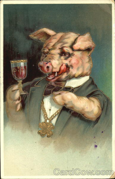 Pig Drinking Wine Pigs