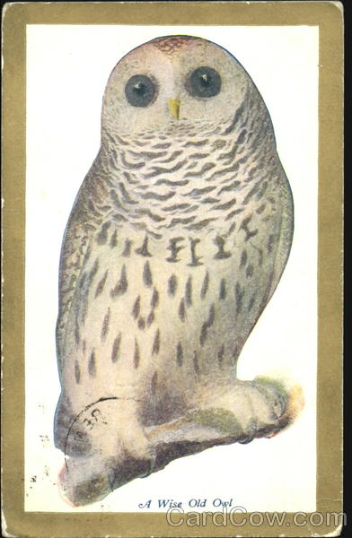 A Wise Old Owl Birds