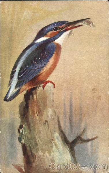 Kingfisher Birds