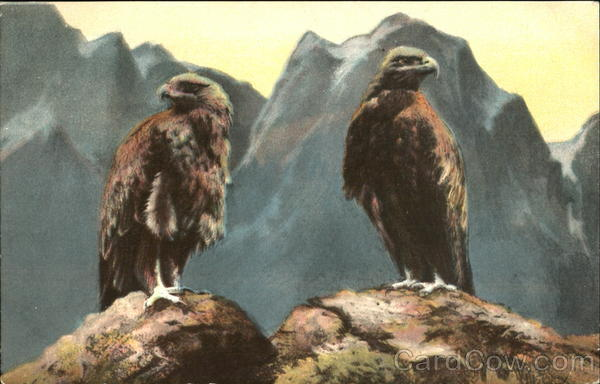 Bald Eagle Birds