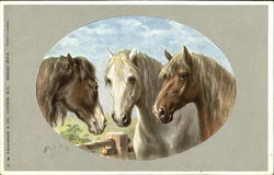 Group of 3 Horses