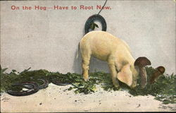 On The Hog Have To Root Now