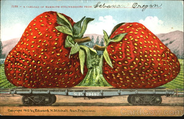 A Carload Of Mammoth Strawberries From Lebanon Oregon