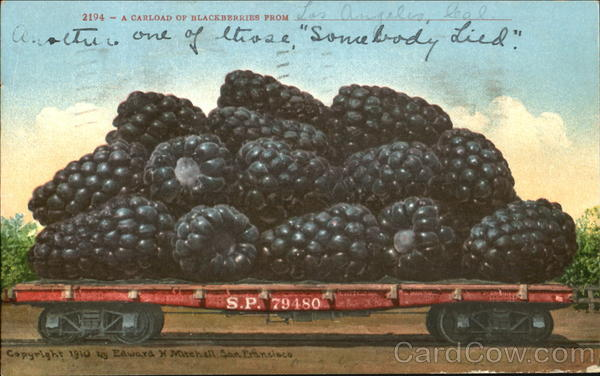 A Carload Of Blackberries From Los Angeles California