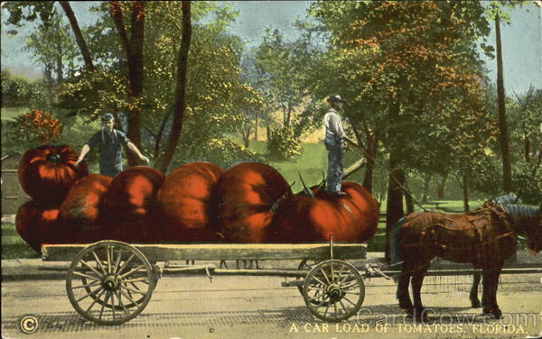 A Car Load Of Tomatoes Florida Exaggeration