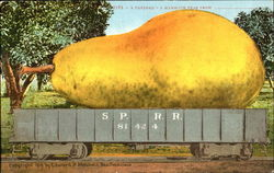 A Carload - A Mammoth Pear Postcard