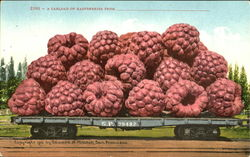 A Carload Of Raspberries Postcard