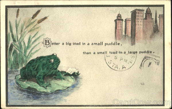 Better A Big Toad In A Small Puddle Frogs