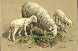 Sheep and Lambs Feeding