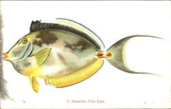 Hawaiian Fish Kala