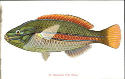 Hawaiian Fish Ohua