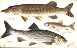 The Pike The Chub The Gudgeon