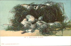 R. I. Souvenir Clams