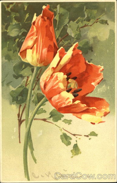 Painted Flowers C. Klein