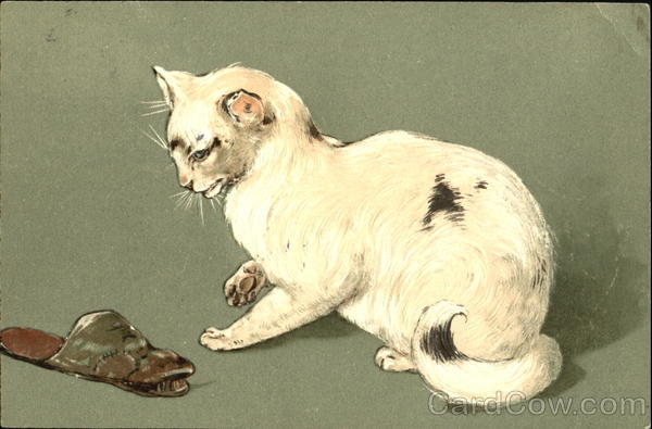 White Cat and the Slipper Cats