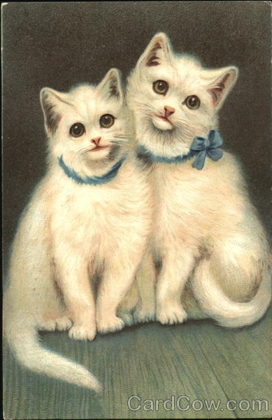 Two White Kittens With Bow Cats