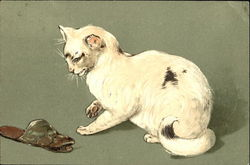 White Cat and the Slipper