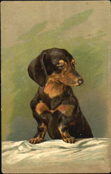 Daschund at the table
