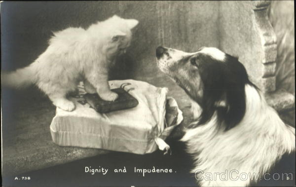 Dignity And Impudence Cats