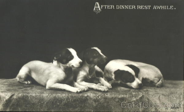 After Dinner Rest Awhile Dogs