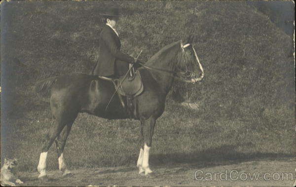 Woman riding a horse sidesaddle Horses