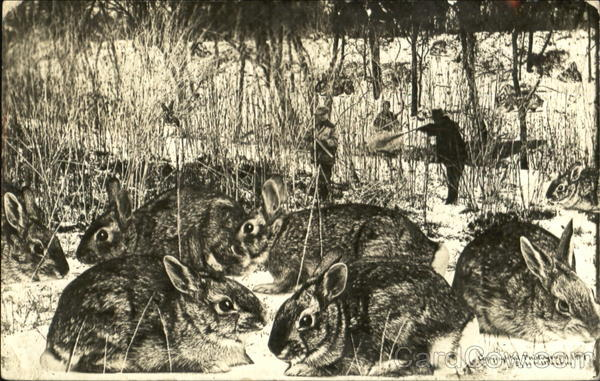 Rabbits in Wintry Scene with Hunters in background