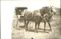Family in Horse-Drawn Carriage