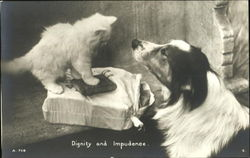 Dignity And Impudence