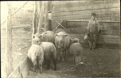 Young Boy in Sheep Pen