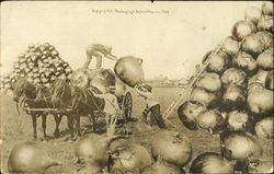 Loading Giant Onion on to Cart Postcard