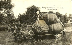 Pumpkins Grown In Iowa Soil Are Profitable Postcard