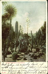 A Cactus Park In California