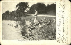 Feeding The Ducks At Middlesex Fells