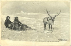 Traveling In The North With Reindeer