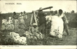 Weighing Cotton