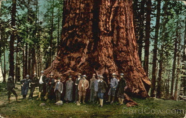 President Roosevelt at General Sherman Tree Theodore Roosevelt