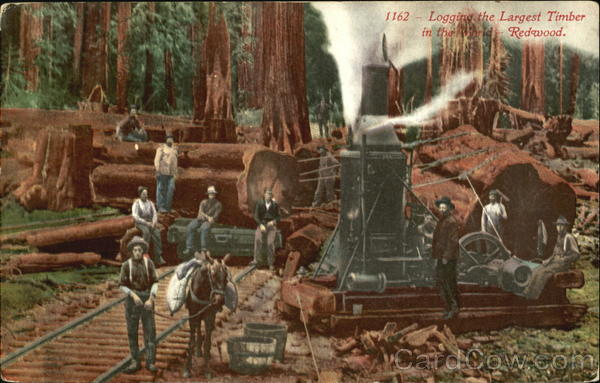 Logging The Largest Timber In The World Redwood San Francisco California