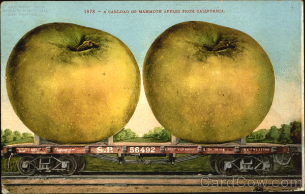 A Carload Of Mammoth Apples From California Exaggeration