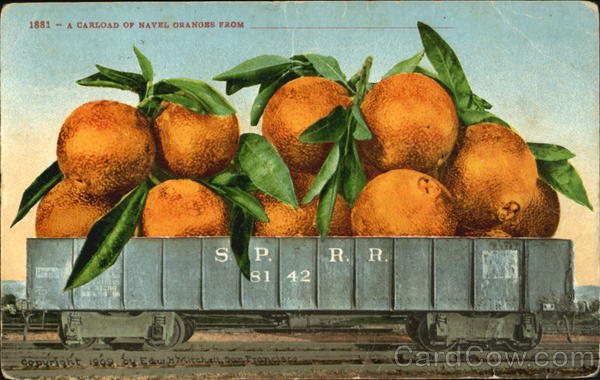 A Carload Of Navel Oranges Fruit