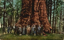President Roosevelt at General Sherman Tree