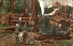 Logging The Largest Timber In The World Redwood