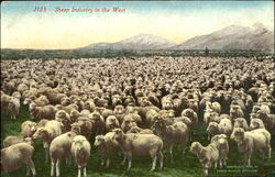 Sheep Industry In The West