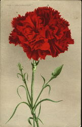 Red Carnation Postcard