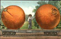 A Carload Of Mammoth Navel Oranges Postcard