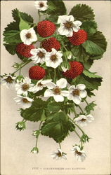 Strawberries And Blossoms Postcard