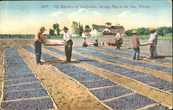 Fig Industry Of California