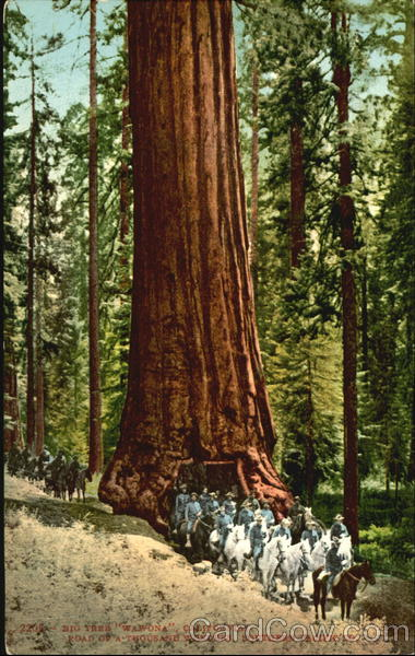 Big Tree Wawona California