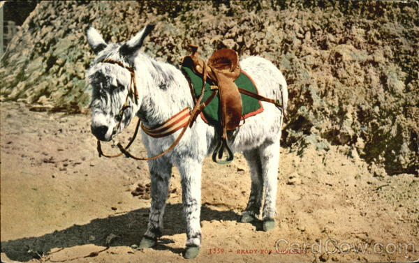 Ready For Business Donkeys