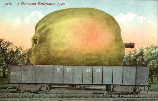 A Mammoth Belleflower Apple Exaggeration